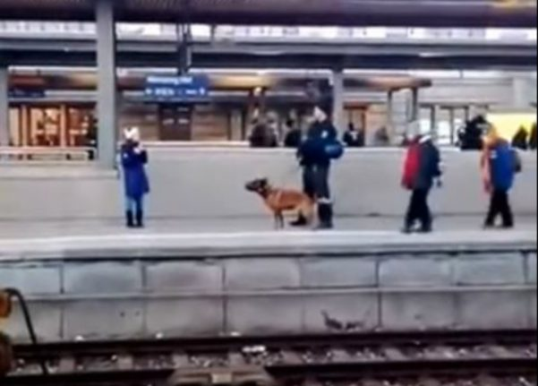 WATCH: Police dog pushes woman onto train tracks in Nuremberg