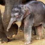 Elephants in Hanover Zoo 'living in daily fear' due to beatings by keepers