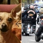 Hells Angels prowl streets of Leipzig in hunt for kidnapped chihuahua