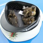 Police save ducklings from busy Autobahn using officer's hat