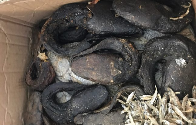 'Care parcel' of rotting snake heads and larvae denied entry to Germany
