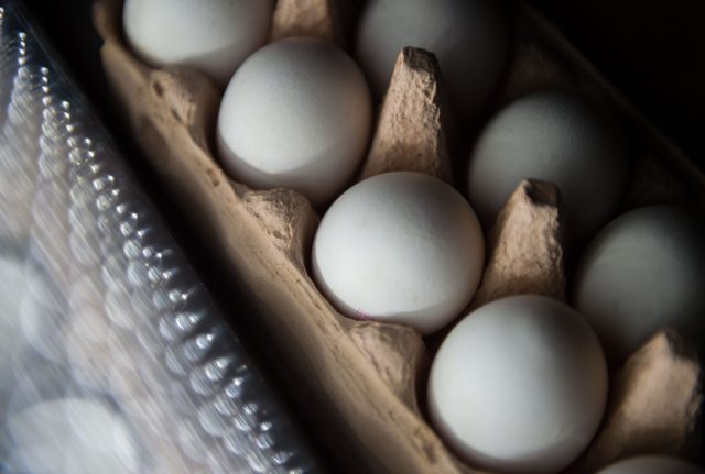 What you should know about the 'toxic eggs' found in 12 German states