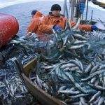 Germany has an environmental 'blind spot' when it comes to fishing, report argues