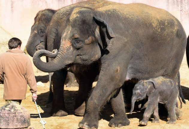 Hanover zookeepers did not mistreat their elephants, prosecutors conclude