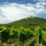 5 things you really should know about wine in Germany
