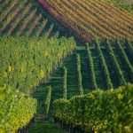 Mystery surrounds 11-year-old found tied up in south German vineyard
