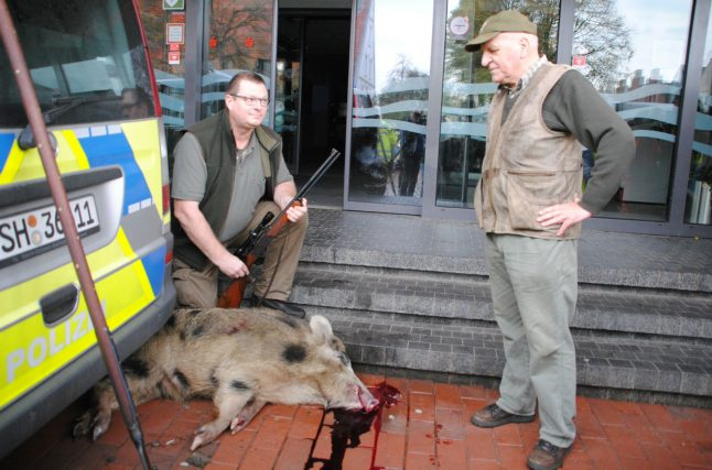 Wild boars go on rampage in north German town, injuring four people