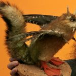 This Wolpertinger was displayed in the Natural History Museum in Leipzig as part of a myths and fairytales exhibition in 2006. This particular Wolpertinger looks a little like a vampire crossed with a squirrel and sports bird wings, duck feet and horns.Photo: DPA