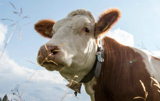 Cowbells are more important than a good night's sleep, Munich court rules