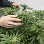 German police association calls for complete legalization of cannabis