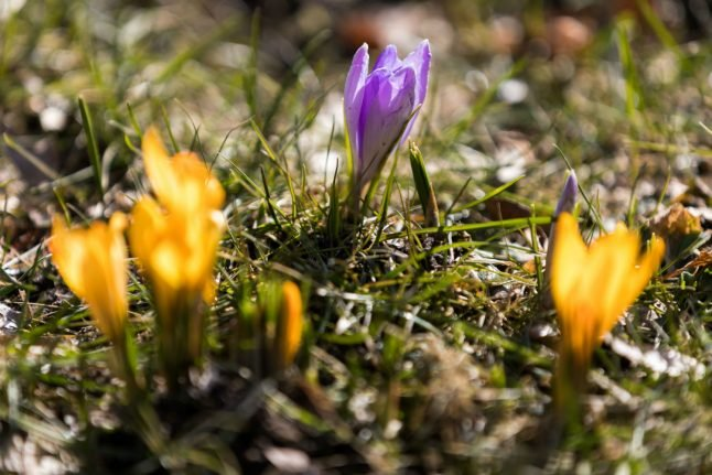 Spring in temperatures: 18C weather predicted for coming weekend