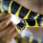 East German supermarket closed after snake attacks woman in fruit aisle