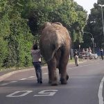 VIDEO: Escaped elephant seen wandering streets of small German town