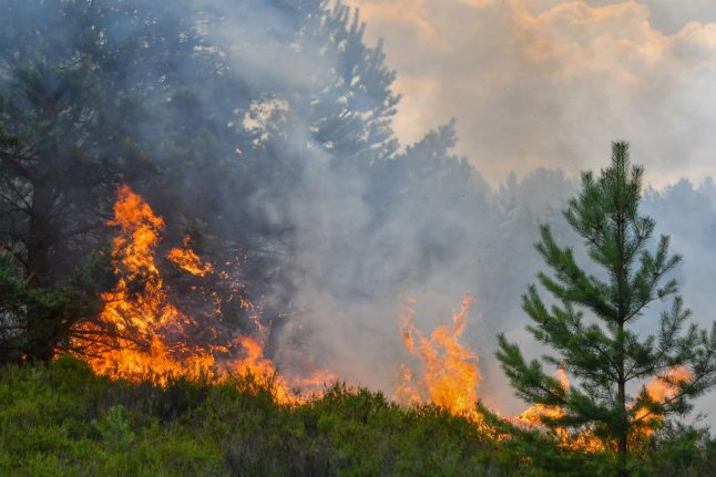 Should Germany be scared of forest fires?