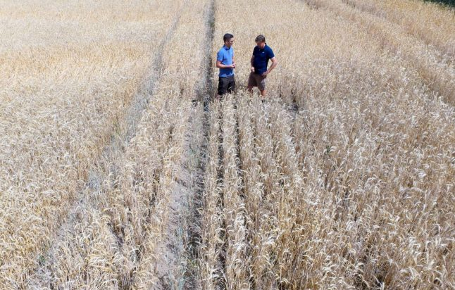 Record drought grips Germany's breadbasket