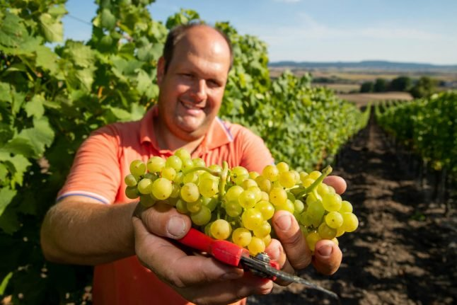 Germany's winemakers cope with climate change by breeding new grapes