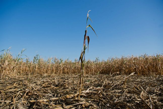 Farmers to get €170 million in state aid after drought ruins harvest
