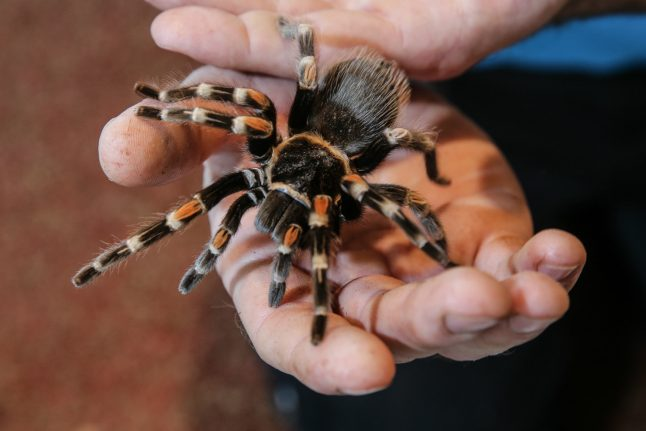 Man in shock after finding a tarantula in his mailbox