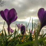 'Early spring' to continue in Germany over weekend