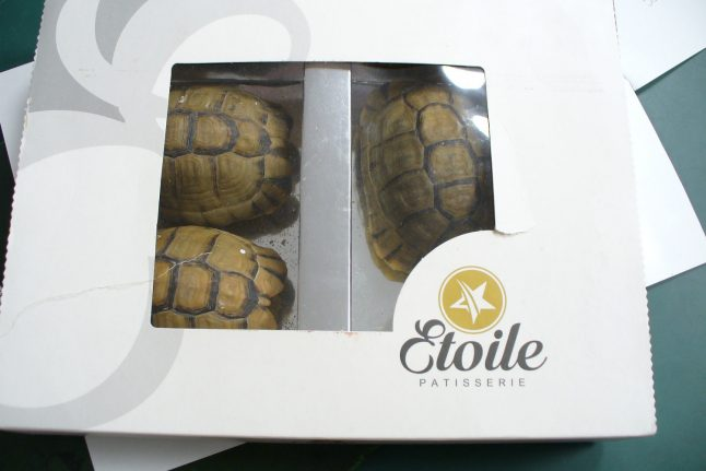 Man tries to smuggle tortoises disguised as desserts through Berlin airport