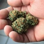 Two years since legalization, patients in Germany still face hurdles accessing medical marijuana