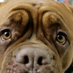 Hungry dog sets kitchen on fire in Saxony