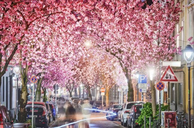 Seven signs that spring has arrived in Germany