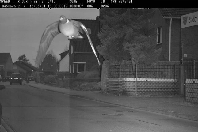 How a German 'racing pigeon' went viral after speed camera snapshot