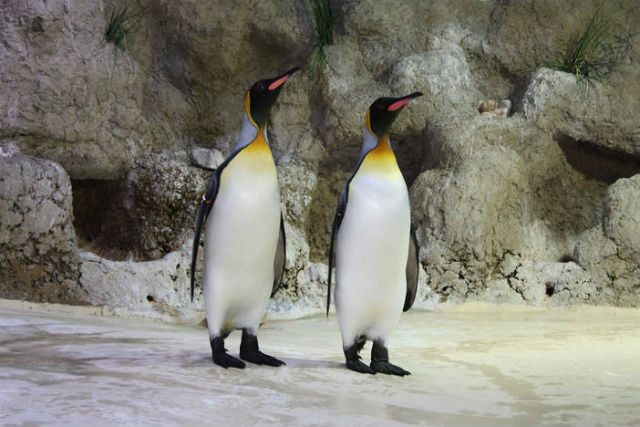 Zoo showcases 'gay penguins' for Munich Pride