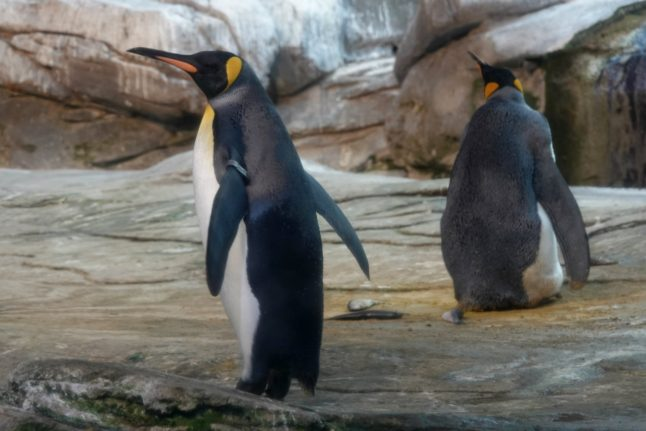 Photo of the Day: Meet the gay Berlin penguins who've adopted an egg