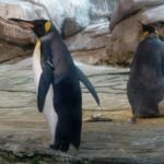 Same-sex penguin couple fails to hatch egg in Berlin