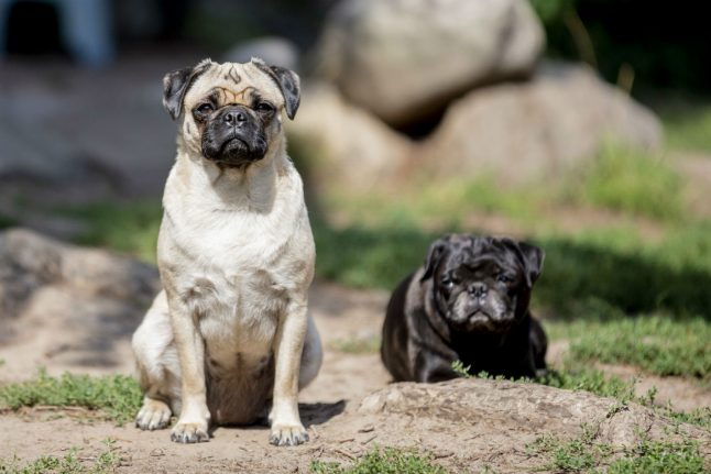 Pet owners warned of four-month wait for travel between Germany and UK after Brexit