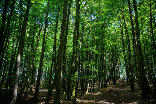 Weekend Wanderlust: Finding woodland and witches in Mecklenburg-Western Pomerania