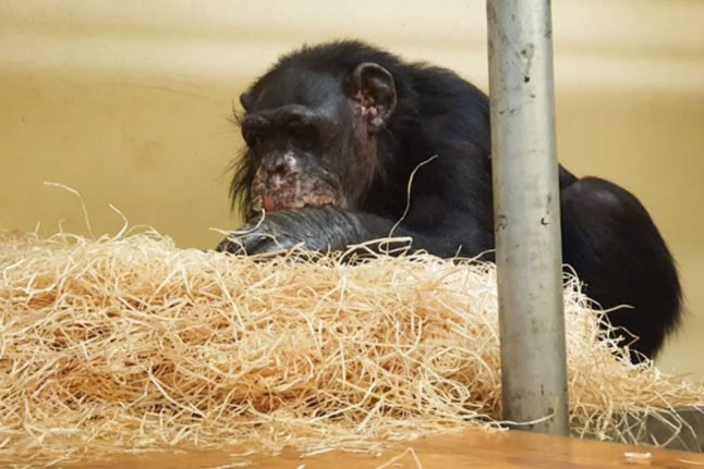 Two surviving monkeys from deadly German zoo fire 'doing well'
