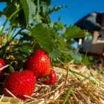 Germany to let in foreign farm workers after alarm over coronavirus border closures