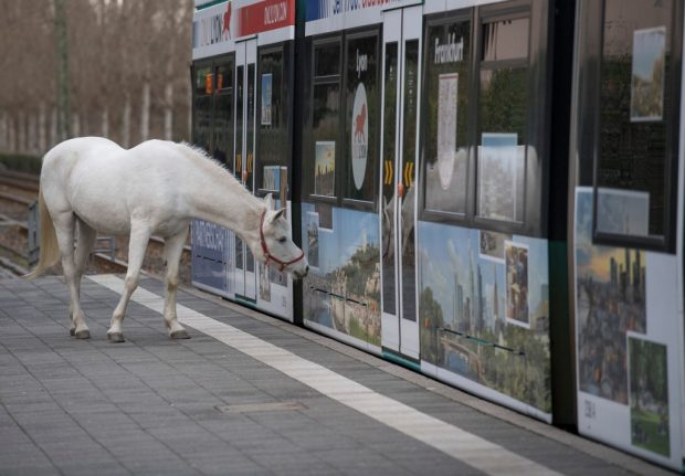 Jenny the city-dwelling horse cheers up German lockdown