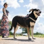 Explained: What's really in Germany's planned 'dog walking law'?