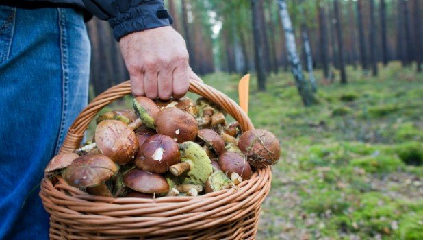 The real world of mushroom pickers and murders in German forests