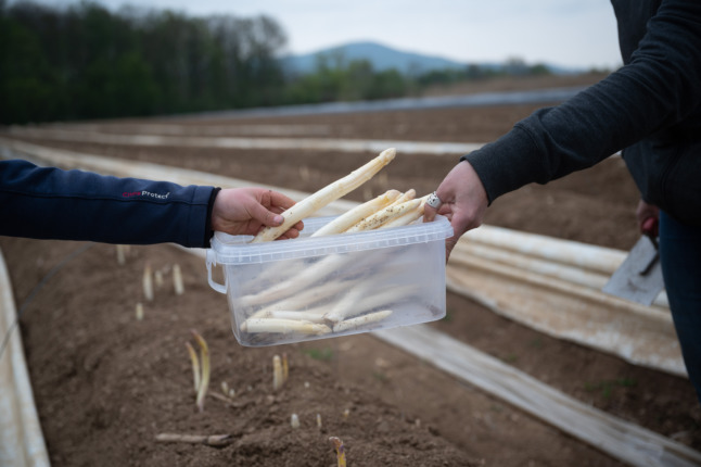 Chilly weather leads to soaring asparagus prices in Germany