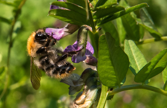 Germany passes new bee-protection law to ward off 'ecological apocalypse'