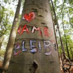 German court rules anti-coal eviction in Hambach Forest illegal