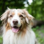 Renting in Germany: What you need to know about keeping pets